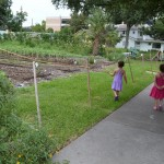 Plant it Forward :: Urban Farms in Houston