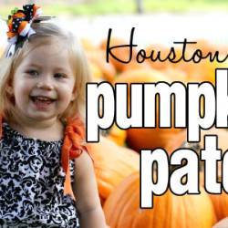 Houston Pumpkin Patches