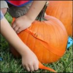 Learning From the Pumpkin Patch :: 3 Must Do Activities Before Carving