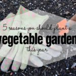5 Reasons You Should Plant a Vegetable Garden This Year