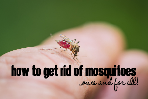 How To Get Rid Of Mosquitoes Once And