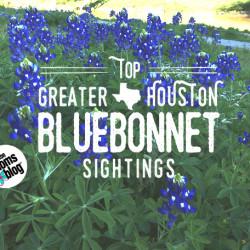 Bluebonnets at Buffalo Bayou Park close to Lost Lake and the Jackson Hill Bridge