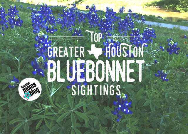 Top Greater Houston Bluebonnet Sightings | Houston Moms Blog