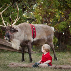 A Photographer's Holiday Sessions Cost | Houston Moms Blog