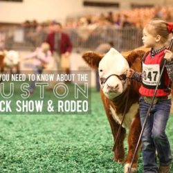 Houston Livestock Show Rodeo Guide