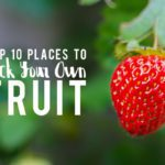 Top 10 Places to Pick Your Own Fruit in the Houston Area