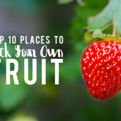 Pick Fruit Houston