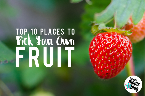 Top 10 Places to Pick Your Own Fruit in the Houston Area | Houston Moms Blog