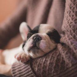 "In Defense of ""Dog Moms"" | Houston Moms Blog"
