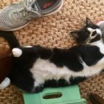 6 Things My Cat Taught Me About Parenting