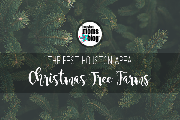 The Best Houston Area Christmas Tree Farms 2018