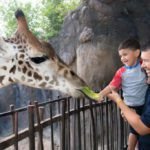Pro Tips for Having a Great Day at the Houston Zoo