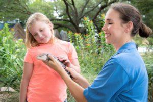 Guest _ Blue-tongued Skink-0001-4377_courtesy Houston Zoo