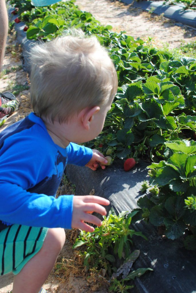 Houston Area Guide to Fruit Picking {Plus Free Produce Printable} | Houston Moms Blog