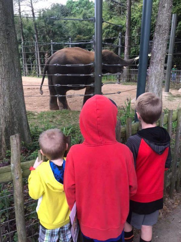 zoo elephant pic