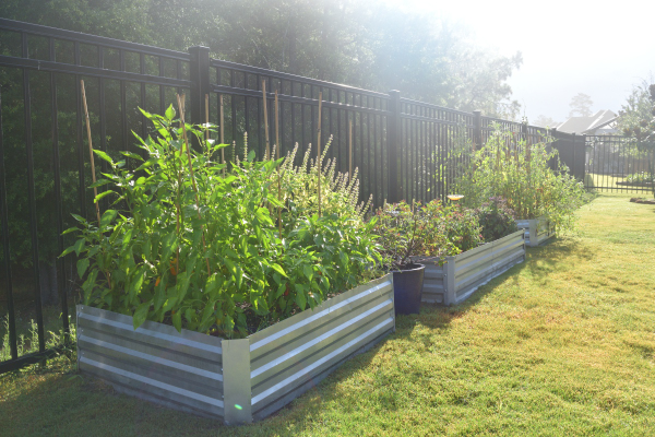 fall garden with raised beds