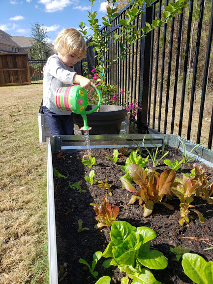 How to Start a Fall Garden with Raised Beds