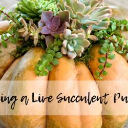 Creating a Live Succulent Pumpkin