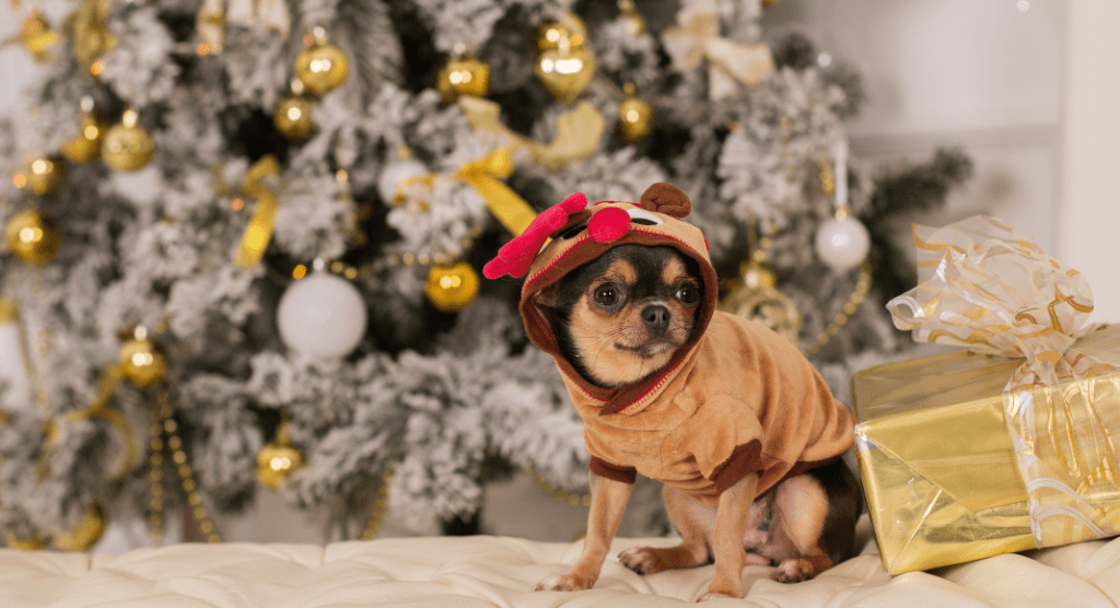 little dog in reindeer costume under a Christmas tree