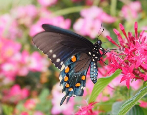 Building a Butterfly Garden with Your Kids