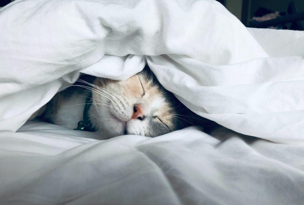 Dreaming of Chamomile :: Celebrating Better Sleep Month